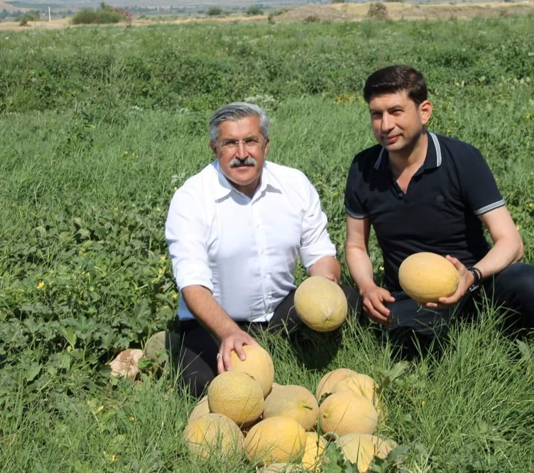 Kırıkhan'da Kavun Hasadı Başladı
