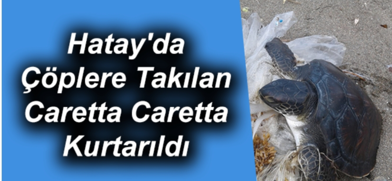 Çöplere Takılan Caretta Caretta Kurtarıldı