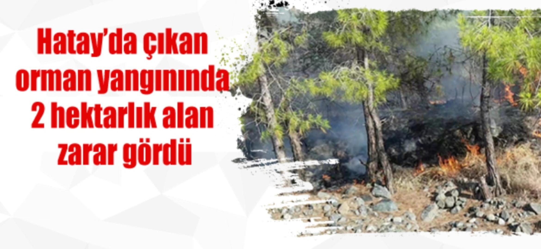 Hatay'da çıkan orman yangınında 2 hektarlık alan zarar gördü