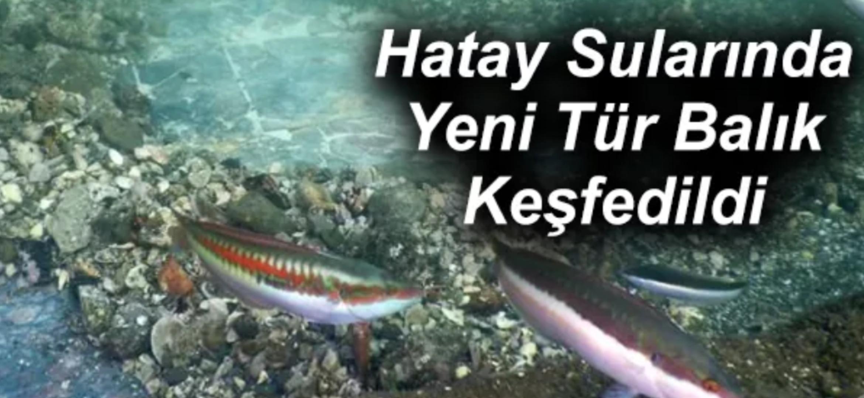 Hatay Sularında Yeni Tür Balık Keşfedildi