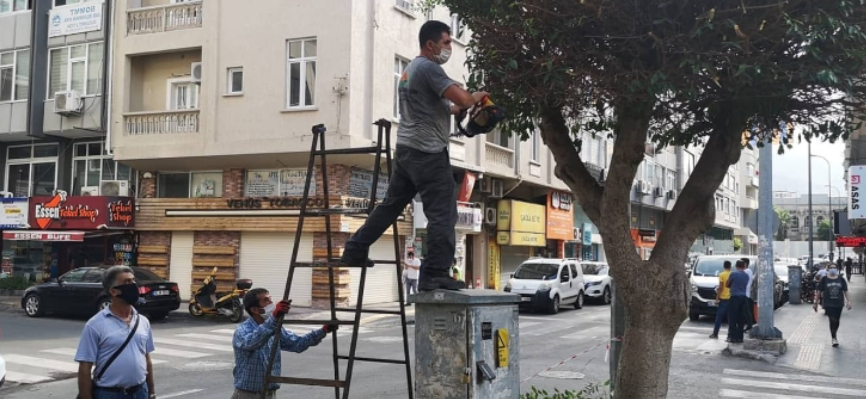İskenderun Belediyesi Park Bahçe Ekipleri Ağaçlarda Sonbahar Budaması Yapıyor