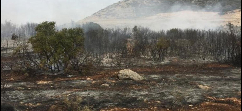 Belen'De Çıkan Zeytinlik Yangını Ormana Sıçramadan Söndürüldü