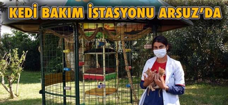 Arsuz'a Kedi Bakım ve Koruma İstasyonu Kuruldu