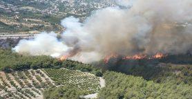 Son Dakika; Dörtyol Ormanlık Alanda Yangın Çıktı